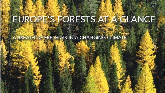 EER-Report 2011: Europas Wälder wachsen