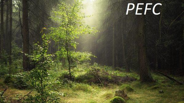 Nachhaltigkeit im Bereich Waldbewirtschaftung und Holzverarbeitung