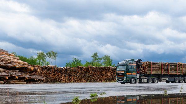 Verbesserte Holzlogistik schützt Wälder