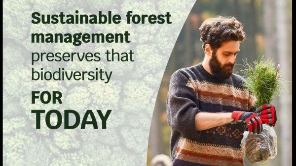 GreenSource: wie die Waldnutzung dem Klimaschutz dient