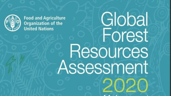 FAO 2020: Die Waldfläche in Europa wächst