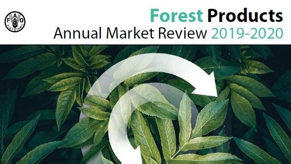 FAO 2019: Käfer-Plage belastet europäische Wälder
