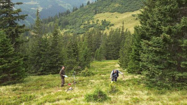 Wer die Bäume in Österreich zählt